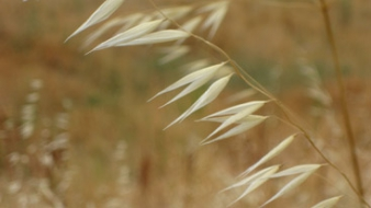 dry grass photo by Rain Breaw