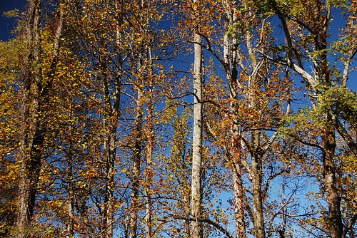 carolina blue sky and fall leaves